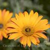 Flower Fields 214