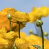 Flower Fields 182