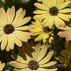 Flower Fields 218