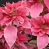 Flower Fields 209