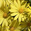 Flower Fields 221