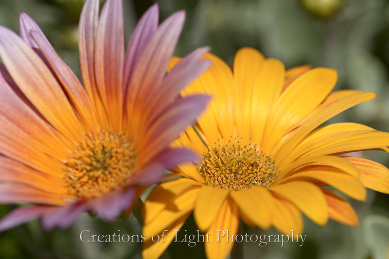 Flower Fields 216