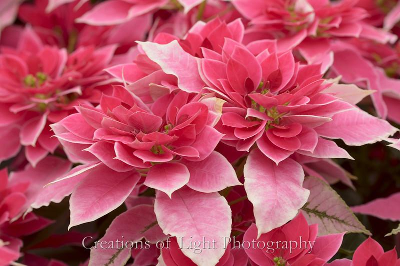 Flower Fields 207