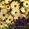 Flower Fields 219