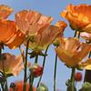 Flower Fields 191