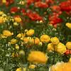 Flower Fields 188