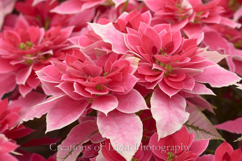 Flower Fields 208