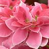 Flower Fields 206