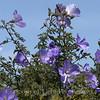 Flower Fields 217