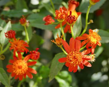Flower Fields in Carlsbad 4/1/15