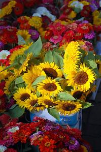 Captured Sunflowers