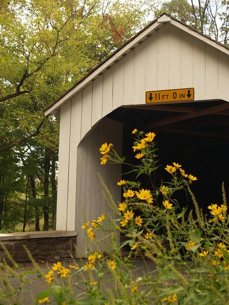 Loux Covered Bridge with Tickseed - Bucks County, PA