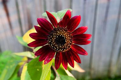 Flower I planted Spring 09