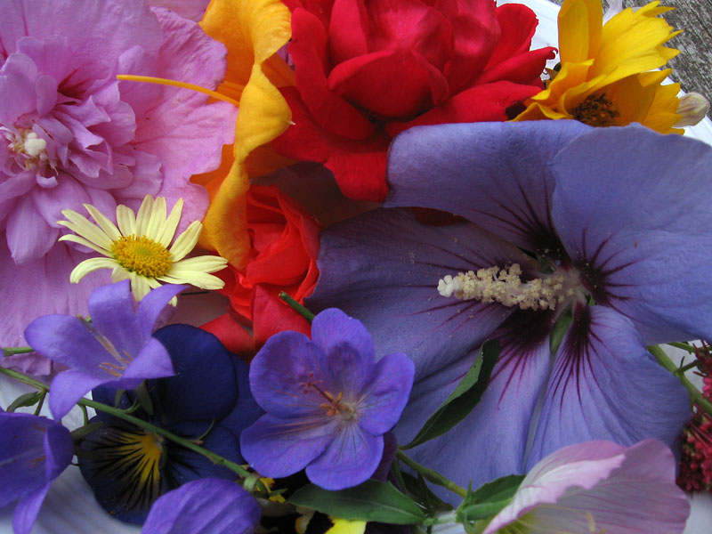 A colorful assortment of flowers blooming today,