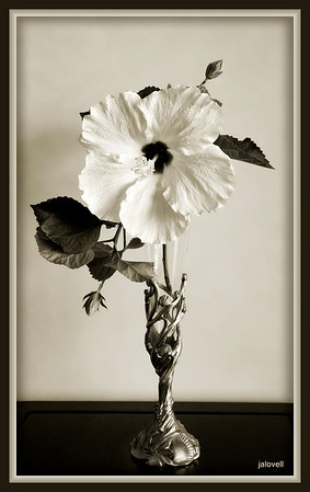 Hibiscus Monotone