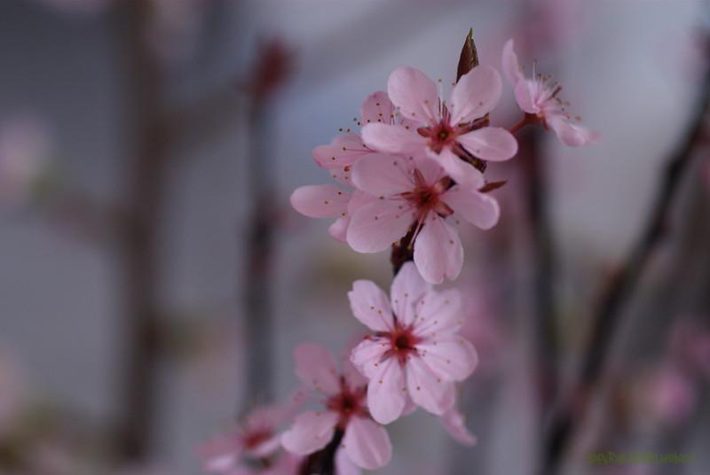 Blossom_0002