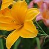 Lys-Flowers-Mariage_NM (03)