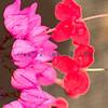rozowy i czerwony water colour