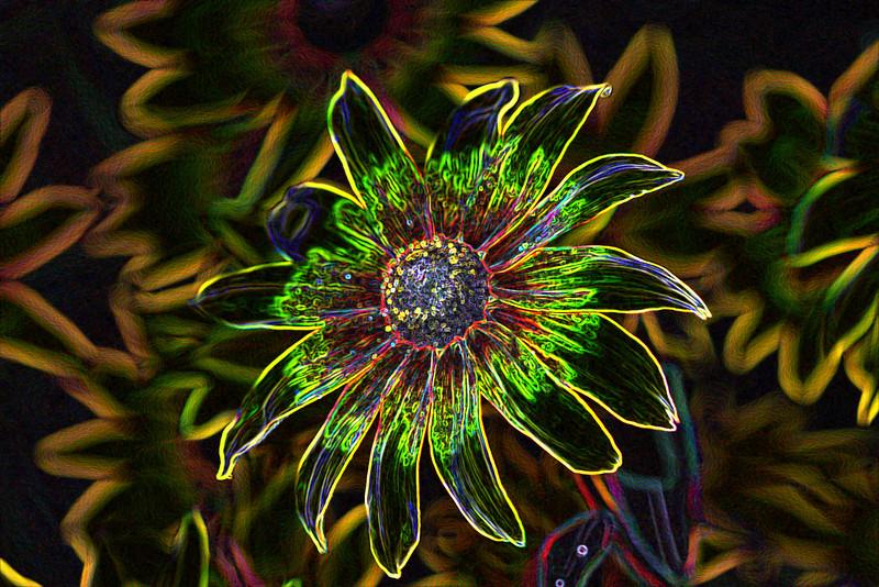 Kwiatki Reni Neonized