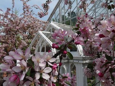 Flower-Scene