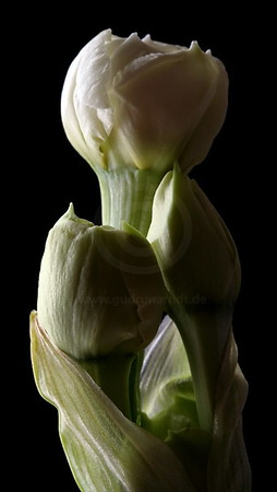 Flower Stills & Abstract