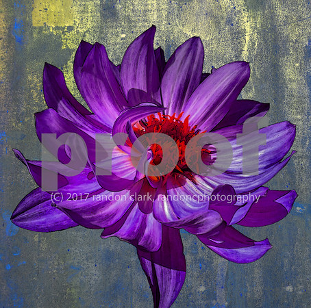 """Purple Fire Flower"""