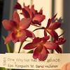 Cattleytonia Why Not 'Red Gold' x Epc. Kyoguchi  'M. Sano' mutation