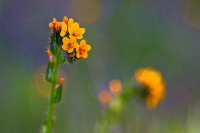 Pachoco State Park, California.