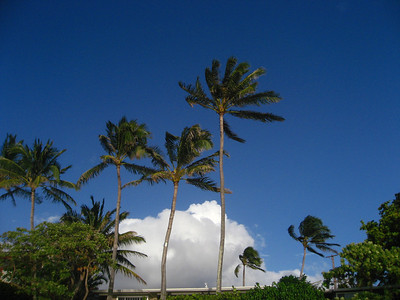 Palm trees against the sky North Shore Oahu, Hawaii
