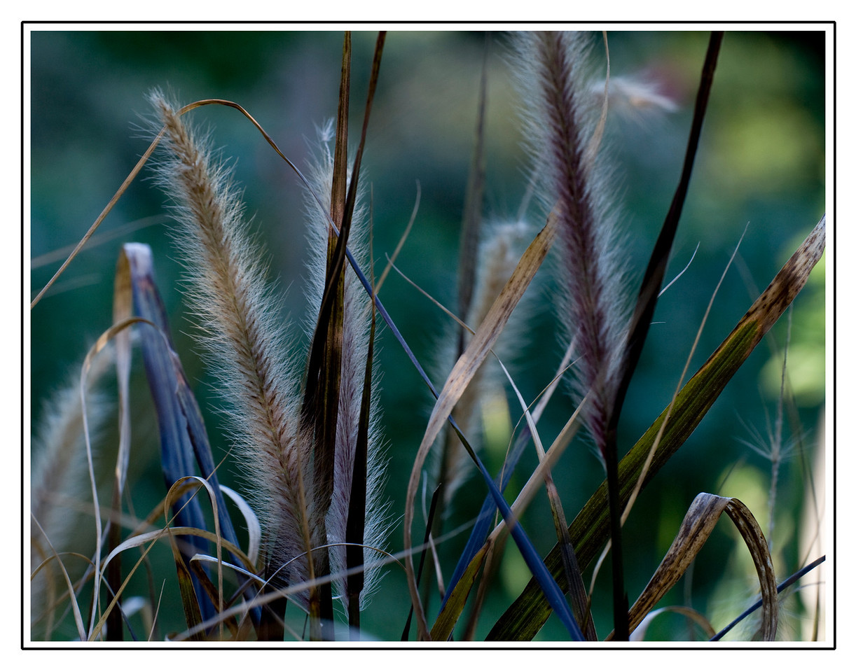 Wild Weeds<br /> Santa Cruz, California