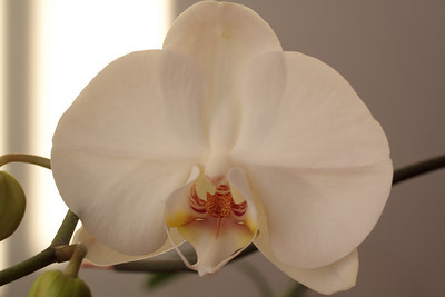 Flowers-2009--8