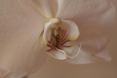 Flowers-2009--13