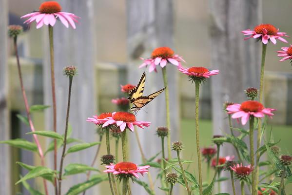 2010 Backyard Flowers