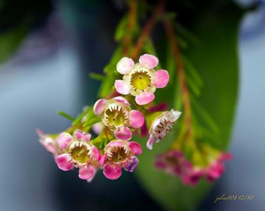 Flowers121010