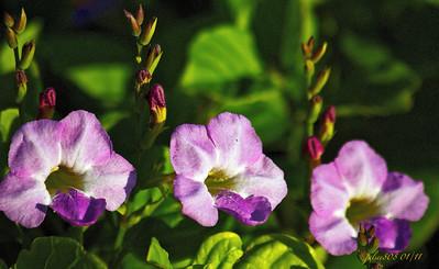 FlowerTrio010811