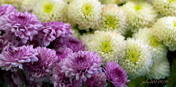 flowers011411