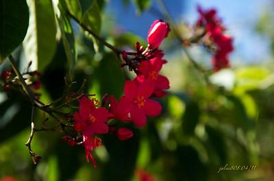 Flowers040211