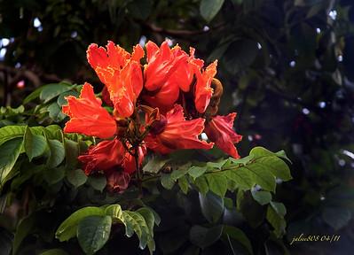 orange042311