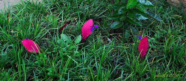 Flowers031811
