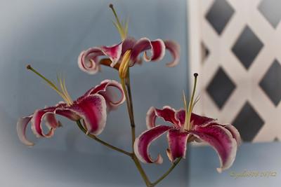Lilies060312-1