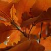 Efterårs blade.