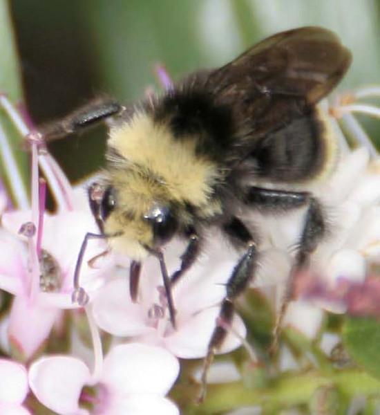 Bee's  - Daisy's - Garden Park