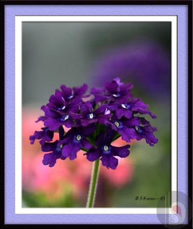 Framed flowers