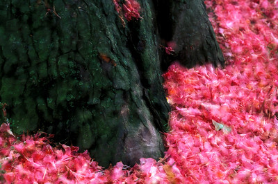 Pink Carpet 2