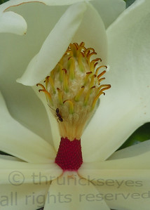 Made this macro photo of a magnolia blossom while visiting The Hermitage just east of Nashville, TN.