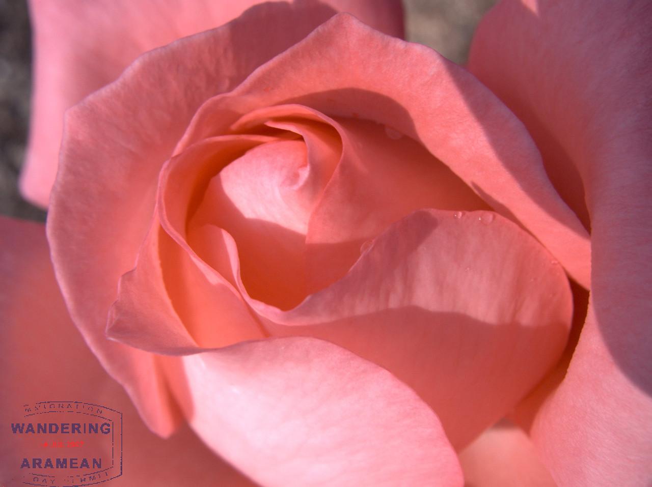 The Anchorage Rose Garden