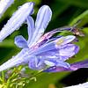 Purple Flowers at thr Poolside