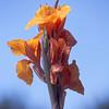 Flowers on Stalk