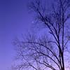 Morning Star and Tree in Brunswick, Georgia