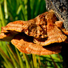 Tree Fungi in Crooked River State Park